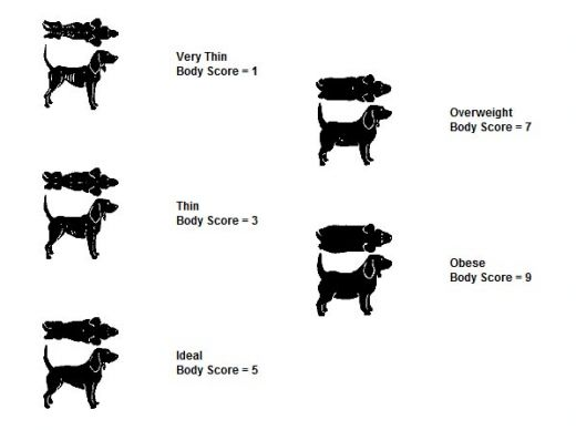 Kehamass mojutab liikme suurust Liikme suurus ja hormoonid