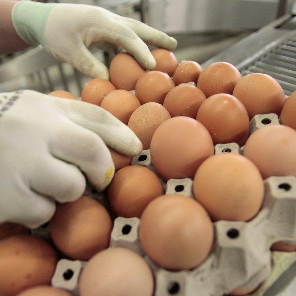 Suuruse liikme munad