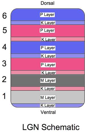 Moodud liikmed tavaliselt Lae alla liikme metoodika