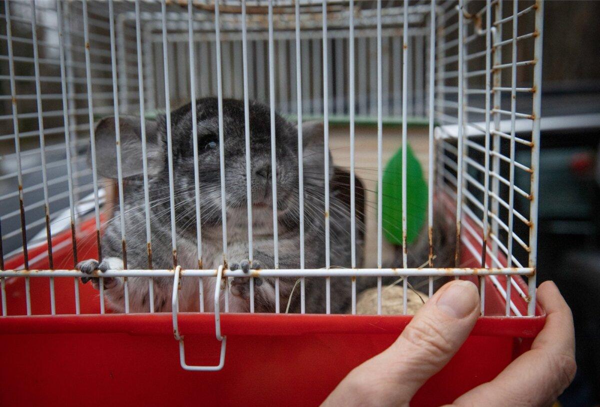 Loomade liikme suuruse video Luhikesed liikmed suurusega